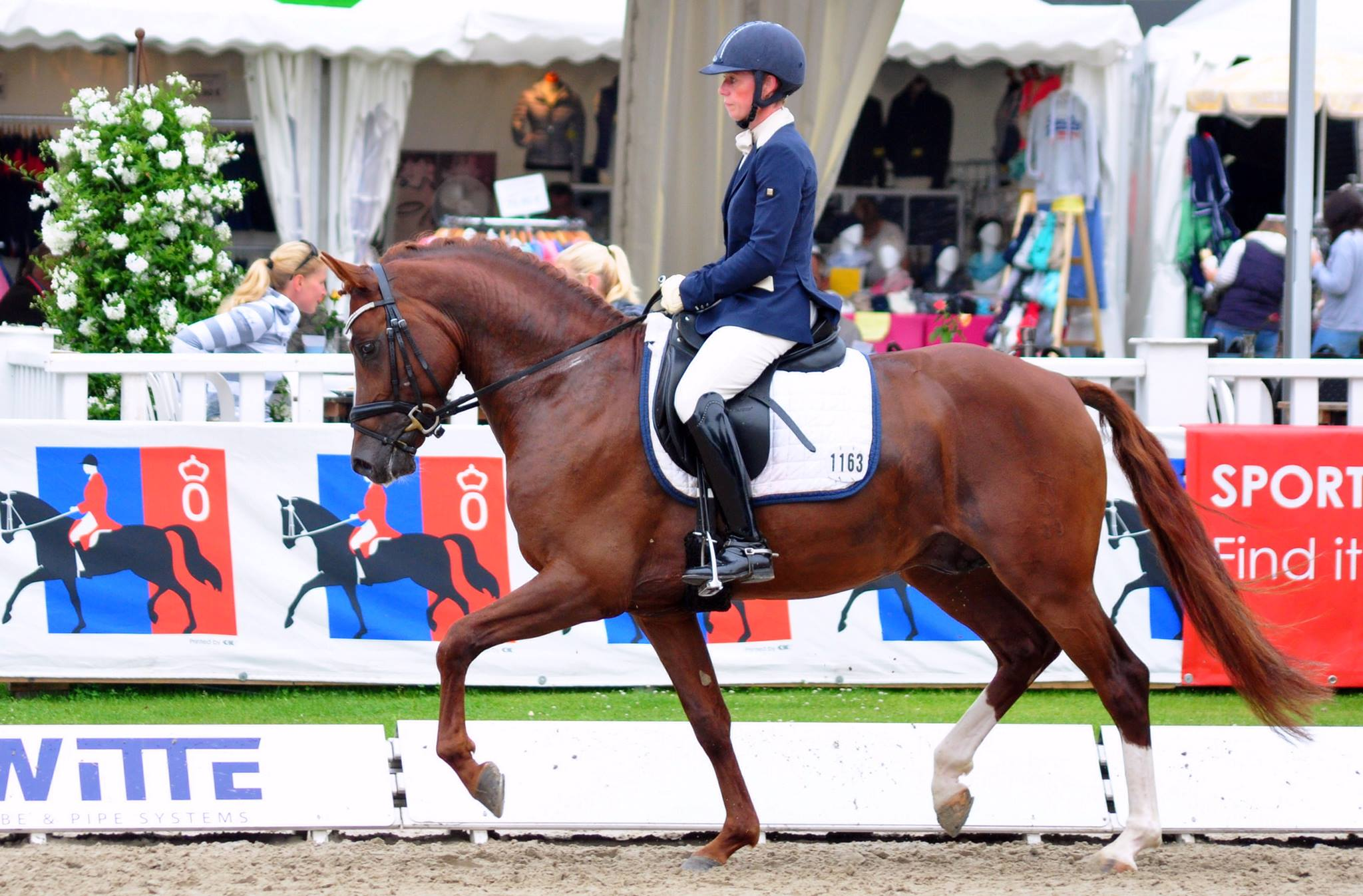 4j. Reitpony Hengst v. Golden Rock
